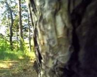 Dildospiele im fotzenwald