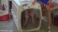 Slutty Pet Begs for a Bone!!! — Part 2