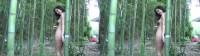 Tree D