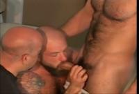 Bear Bust (man, style, tit, new)