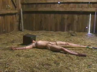 Vip Full Collection Insex 2003 - 50 clips!