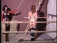 California Star - Pony Girl 1:In Harness