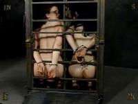 Insex - Carmoon