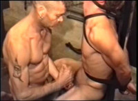 Whipping Master 41 Series — Sweet Boys