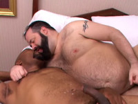 All Amateur Bears 2 - Special Delivery