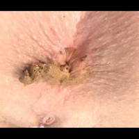 College Girls Pooping 12 scat filesmonster