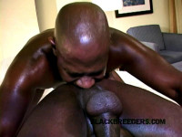 Black Breeders   Even Daddies Need Dick