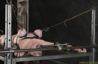 Insex – Bedding Piglet (2003)