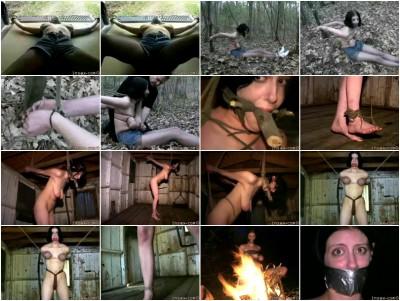 Insex - Road Trip (101) 2002