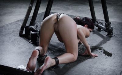 Nikki Knightly-Saddle Up