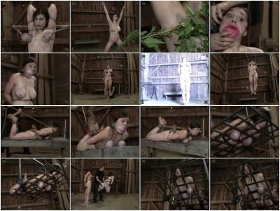 Kunt Log 2 Pig Barn Live Feed Piglet, 731 – InSex