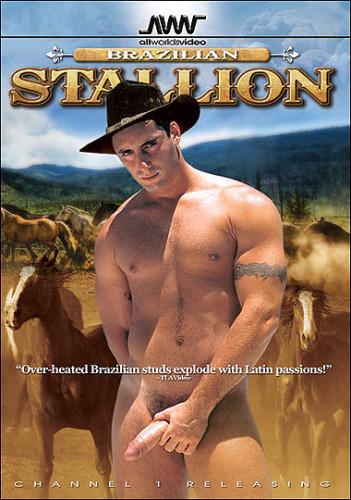 Brazilian Stallion