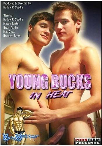 Young Bucks In Heat