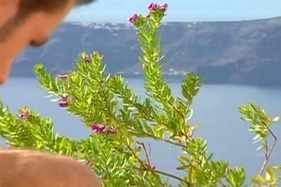 [Pacific Sun Entertainment]Muscular Anal Sex Happens On A Hot Carribean Island