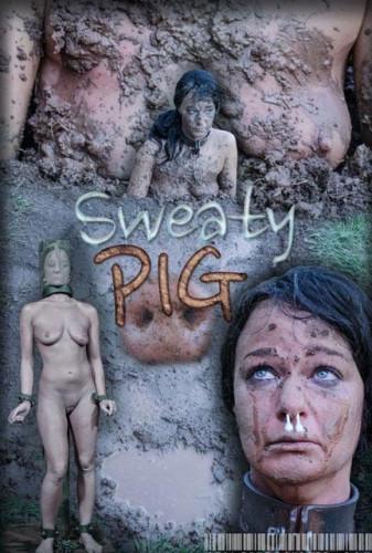 Sweaty Pig
