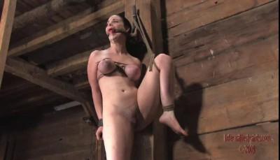 Sybil 6