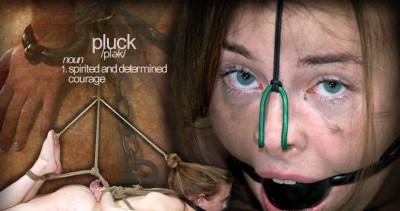 Pluck 2