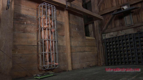 bdsm Caged Pig