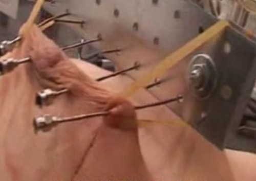 DOWNLOAD from FILESMONSTER:  BDSM Extreme Torture  Anita Extreme Needles   TG2Club