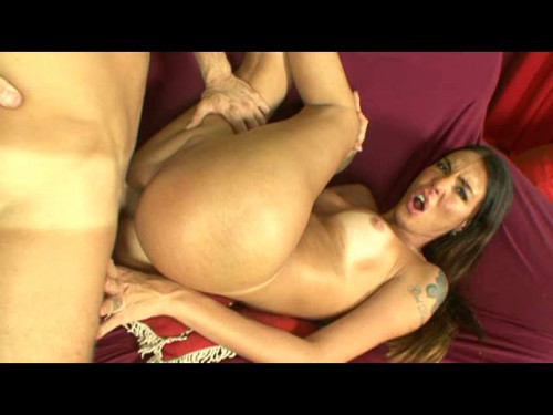 DOWNLOAD from FILESMONSTER: transsexual Kinky Horny Shemales 2