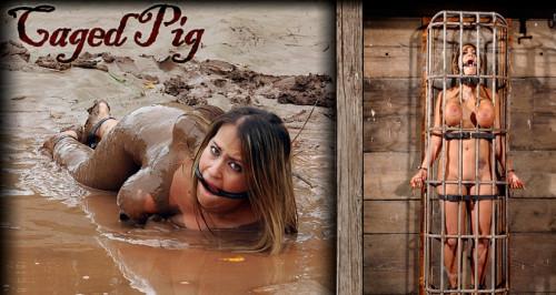 bdsm Caged Pig