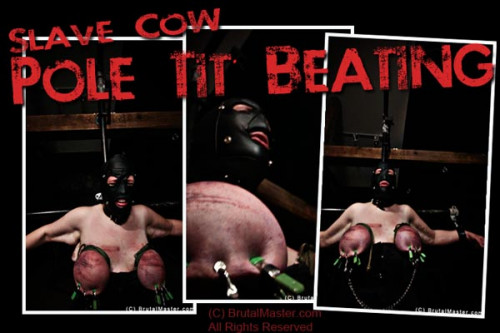 bdsm Cow - Pole Tit Beating