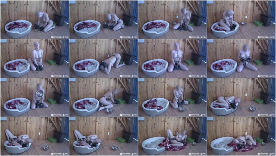 BDSM Puppy Fun Rachel Greyhound