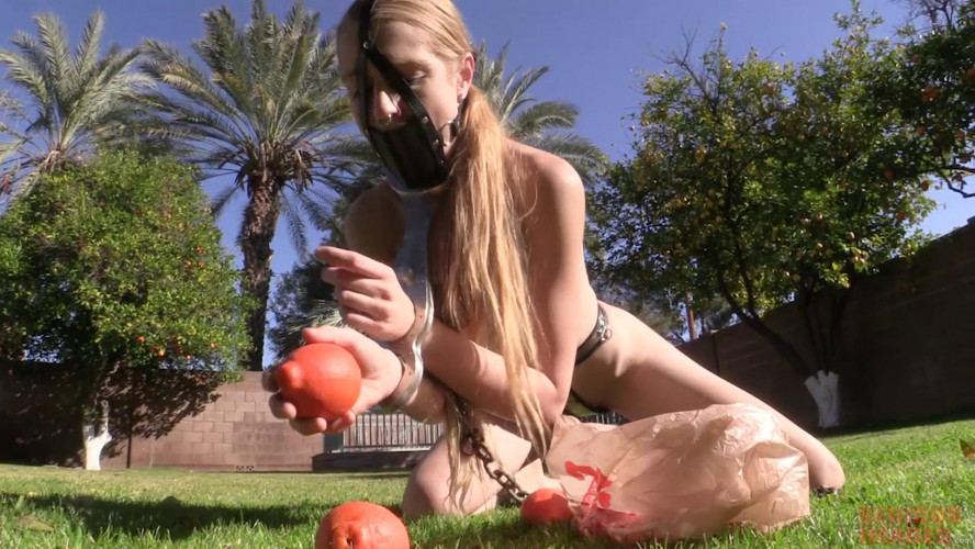 BDSM Harvest