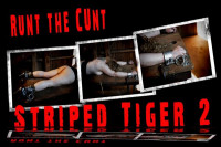 Runt  Tiger Stripes 2