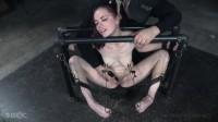 Ivy Addams Pit Pull