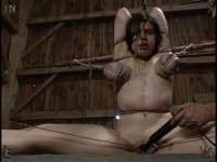 Insex – Kunt Log 2 (Pig Barn Live Feed From September 9th) (Piglet, 731)