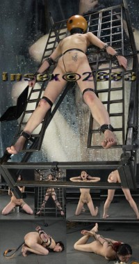 The Last Day Of Xmas Live Feed 731 – InSex