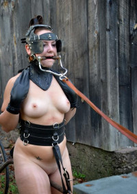Pony In Harness