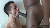 Swallow My Big Black Cock