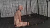 New Cage Roamings – Rachel Greyhound