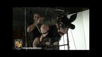 Pony Play – Pony Anna Animal Play Gord's