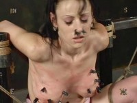 Insex - Tests 711