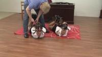 Madalynn Raye And Elizabeth Andrews : Dual Leather Strap Hogties.