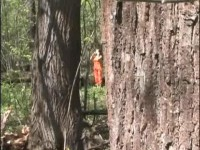 The person with the chamber in wood on hunting