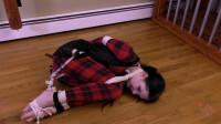 Her Incentive Plan — Raven — HD 720p