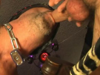 Horsehung Studs Breeding My Guts