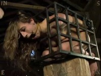 Insex - Barn 49 (Farmed Out)