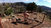 BrutalMaster - Greyhound Daily Routine