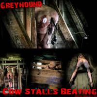 BM - Greyhound Cow Stall Beating
