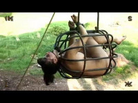 Insex — The Pear Raw