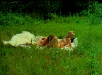 Der Lust Verfallen(1970s)- Herzog