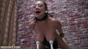 Nyssa Nevers – angry HuCow [2021,Nyssa Nevers,metal collar,bondage,gag][Eng]