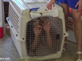 Slutty Pet Begs for a Bone!!! - Part 2