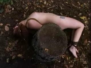 Insex - Woods