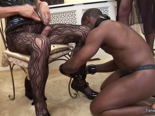 She-male Domina with another shemale and dark-hued marionette stud